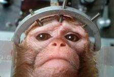 900 scimmie, brianza, Paolo Mocavero,onorevole Michela Vittoria Brambilla,Harlan,Green Hill